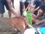 Penyembelihan hewan Kurban di Sambong, Arjosari. (Foto : Shultan)